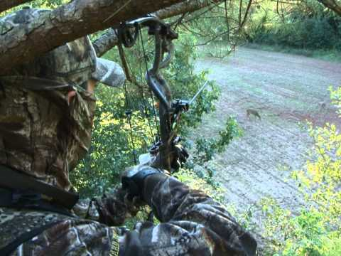 Early Season Deer Hunting - Realtree