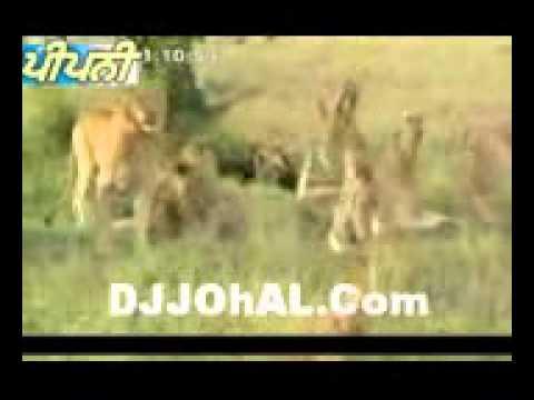 Desi Sher [punjabi Funny] (djjohal) video