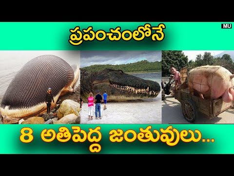 World's 8 Biggest Animals in the World || in Telugu || Mysteries and Unknown Facts