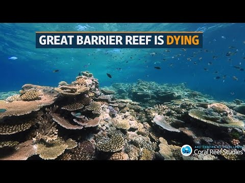 Australia's Great Barrier Reef is dying