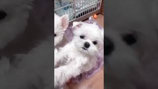 TRY NOT TO LAUGH ,Cute DOG Videos , Funny Videos 0216 1