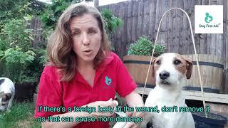 Dog Bleeding - Advanced Bleed Actions