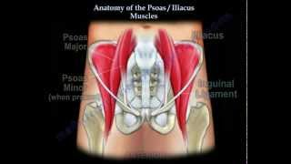 Anatomy Of The Psoas & Iliacus Muscles - Everything You Need To Know - Dr. Nabil Ebraheim