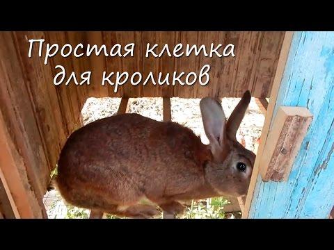 Клетки для кроликов солнечный кролик