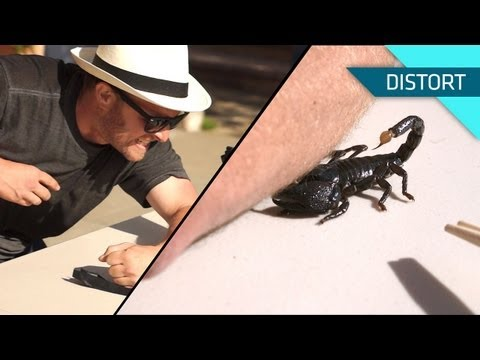 Getting Stung by a Scorpion. In Slow Motion!