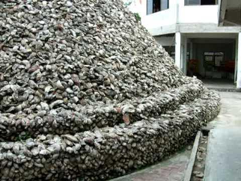 Big Oyster Shell Chedi At Wat Chedi Hoy