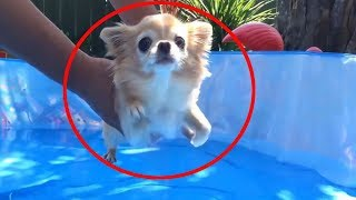 The Best Animals Fails (MUST SEE!) #4