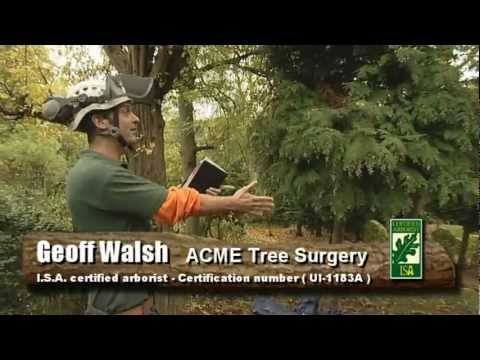 ACME Tree Surgery with Geoff Walsh tree surgeon - Sheffield South Yorkshire