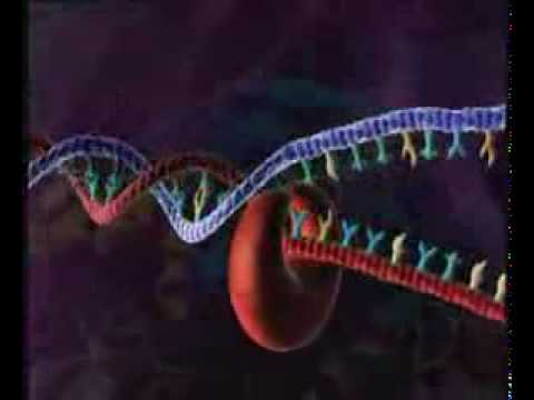 HIV VIRUS REPLICATION 3D