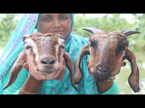 Village Food Goat Head Vuna Recipe Delicious Bengali Cooking Traditional Yummy Goat Head Curry