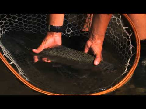 Madison River Fly Fishing with Montana Angler