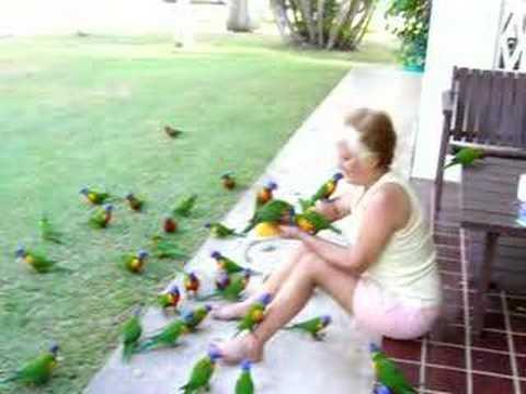 カラフルさが目を引く!ゴシキセイガイインコに餌を与える女性