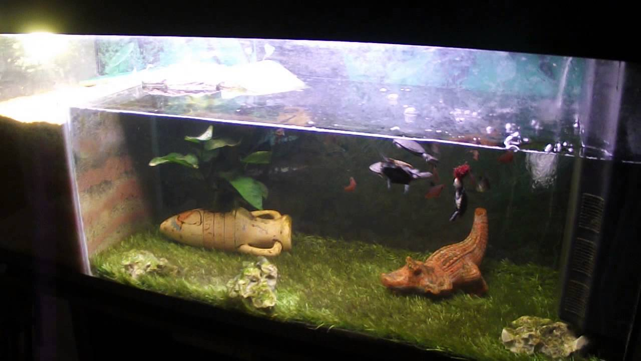 Tortue pelomedusa aquarium 240 litres youtube for Aquarium tortue
