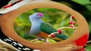Natural Bird, সুন্দর পাখির কলরব