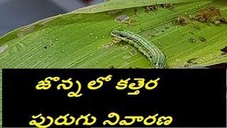 జొన్నపంటలో కత్తెర పురుగు నివారణ /jonna pantalo kattera purugu nivarana