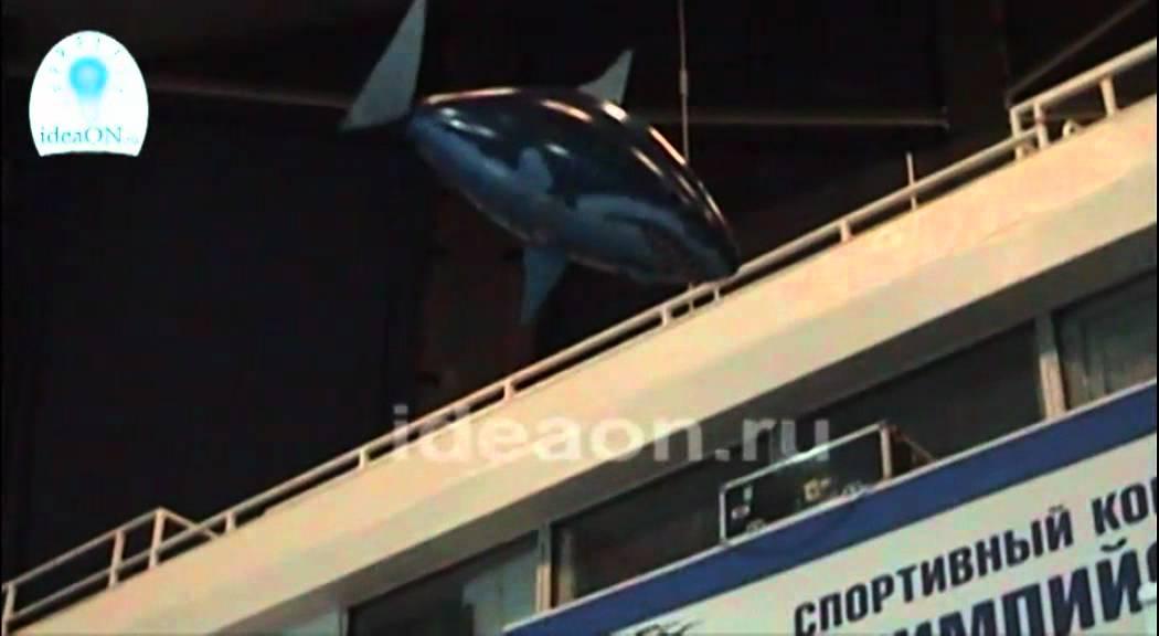 Летающие рыбы в бассейне СК