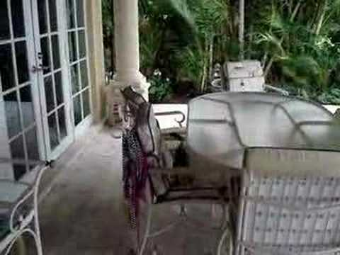 Pet Squirrel Monkeys, Joey and Sofie, playing outside Video