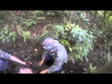 Wild boar hunting by dog & knife in Hawaii