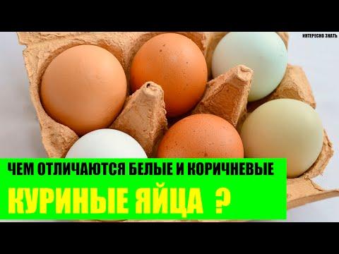 Чем отличаются белые и коричневые куриные яйца?