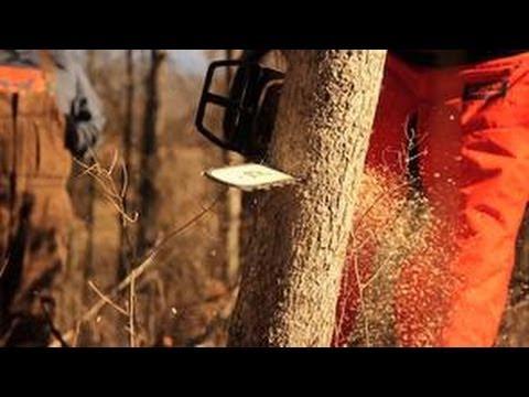 Hinge Cutting for Improving Deer Hunting - The Management Advantage #29