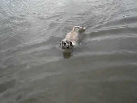 ウナギ犬?うちのわんこの初泳ぎ♪ (投稿者 : ヒロゴン さん)