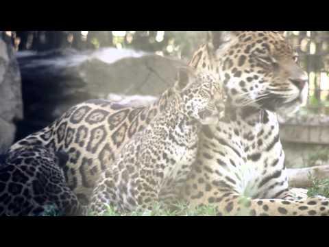 Nuevos nacimientos en Safari Madrid - 2014