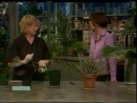 BBG's Susan Pell on the Martha Stewart Show