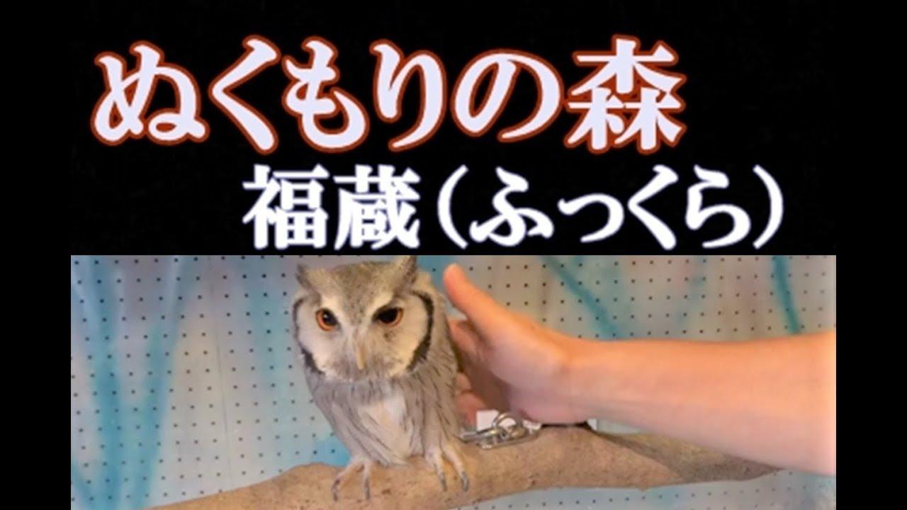 ぬくもりの森 フクロウ