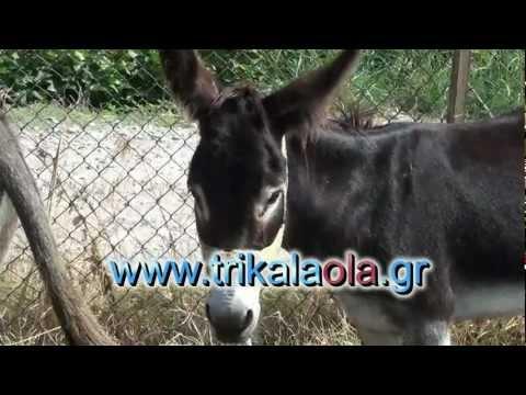Τρίκαλα ζωοπάζαρο γαϊδούρια άλογα μουλάρια 13-9-12 2ο