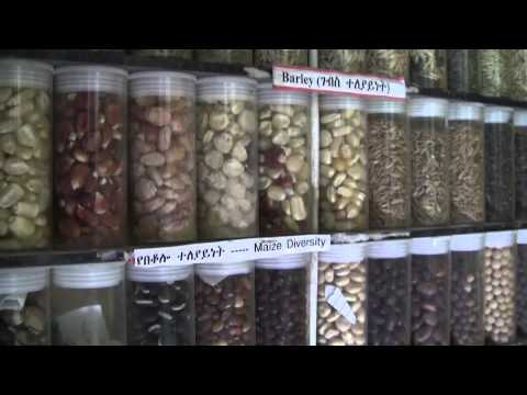 Ethiopia's seed banks and the search for food security