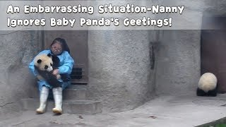 An Embarrassing Situation-Nanny Ignores Baby Panda's Geetings!   iPanda