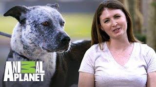 Cómo aprender a usar la puerta para perros para ser adoptado | Pit bulls y convictos | Animal Planet
