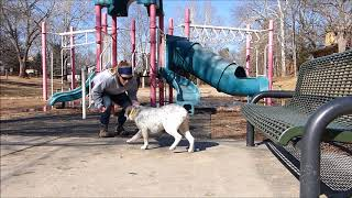 Doc - Off Leash Dog Training, Dog Training Omaha Nebraska