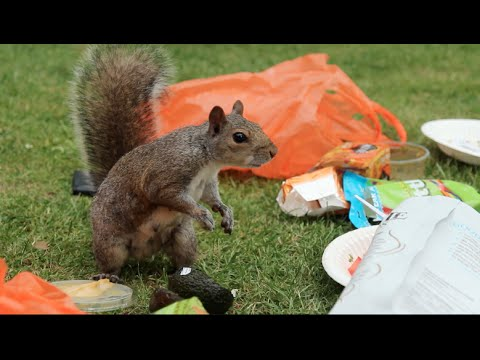 SQUIRREL PICNIC / JONDBARKER