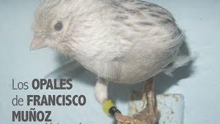 Opales de Francisco Muñoz | Mejores Fotos