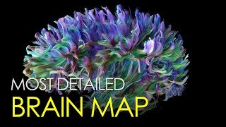 The most detailed map of the brain ever created