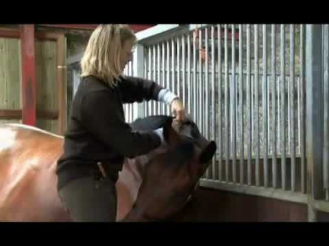 How to Plait your horse for the Show Ring