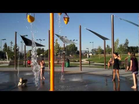 Dog in the Water Park