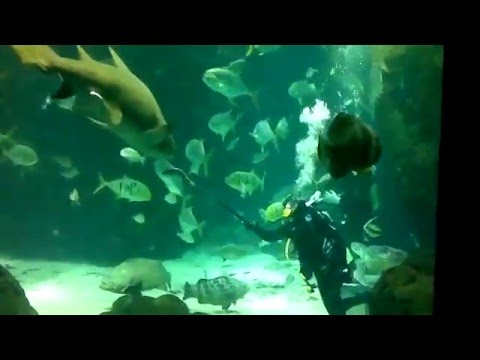 Arab Beauty Naked swimming leaked private MMS ..............Kuwaiti aquarium