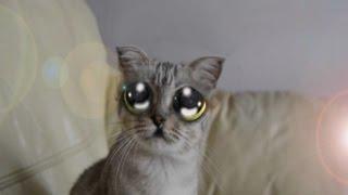 Anime in real life mi gato kawaii en la vida real