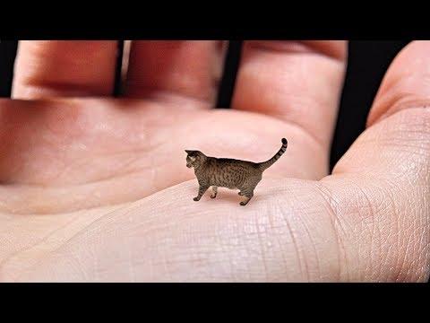 Worlds smallest animal species