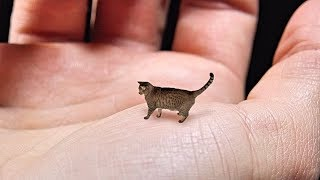 World's Smallest Cat - Cute, Tiny and Mean