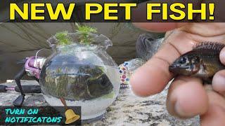 Catching Pet Exotic Fish for Aquarium   Monster Mike