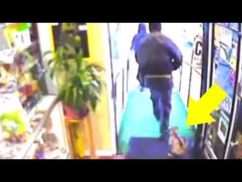 Собаки против грабителей
