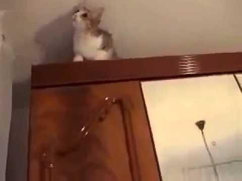 кошачий триал прыжок на шкаф Юмор! Прикол! Смех   YouTube