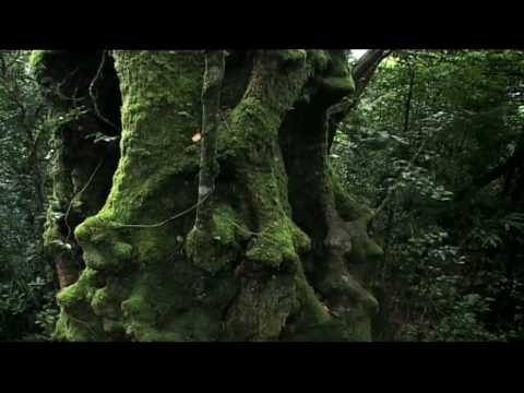 Rainforest: Beneath the Canopy Part 01