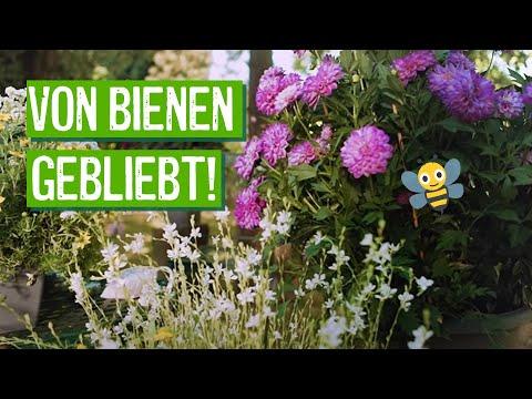 Bienenfreundliche Pflanzen für Garten und Balkon