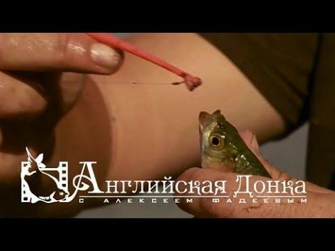 angliyskaya-donka-s-alekseem-fadeevim-vse-vipuski