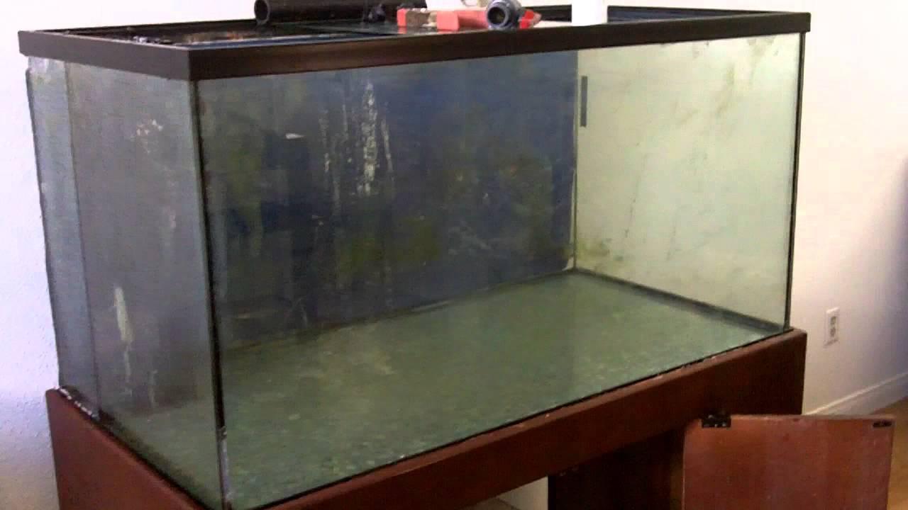 Conceptos básicos de acuario de agua salada