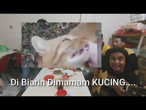 Download IKAN ASIN DI SAMBELIN Mp4 baru